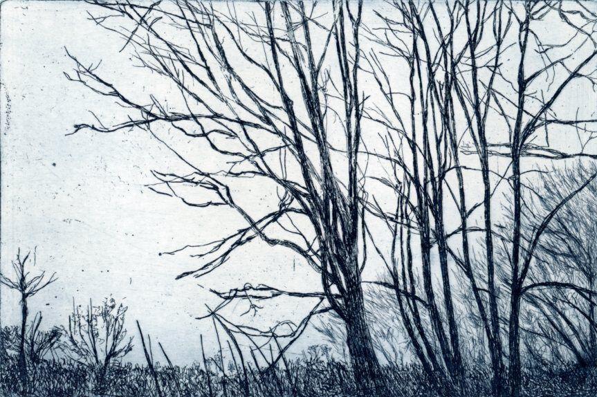 Bäume Kreuth